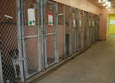 Dog Kennel With Dogs Looking at Kennel